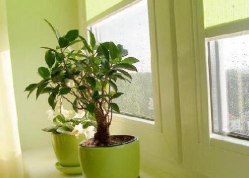 招财植物的风水及摆放